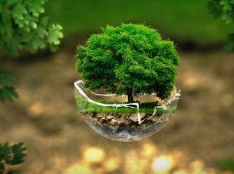 5 de juny, Dia Mundial del Medi Ambient