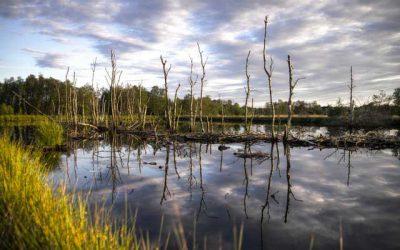 Los humedales, una de las claves para la supervivencia climática