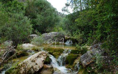Dia Mundial de la Natura i de la Vida Silvestre